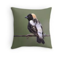 Bobo On A Wire / Bobolink  Throw Pillow