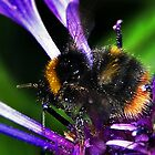 Bumble Bee Buzz by Aj Finan