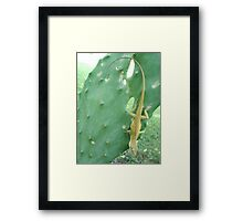 Anole on Cactus Framed Print