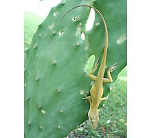 Anole on Cactus Photographic Print