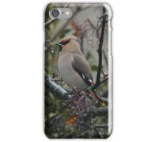 Waxwing case iPhone Case/Skin