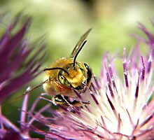 The Bee That Dominanted by Shelly Harris