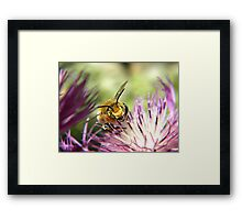 The Bee That Dominanted Framed Print
