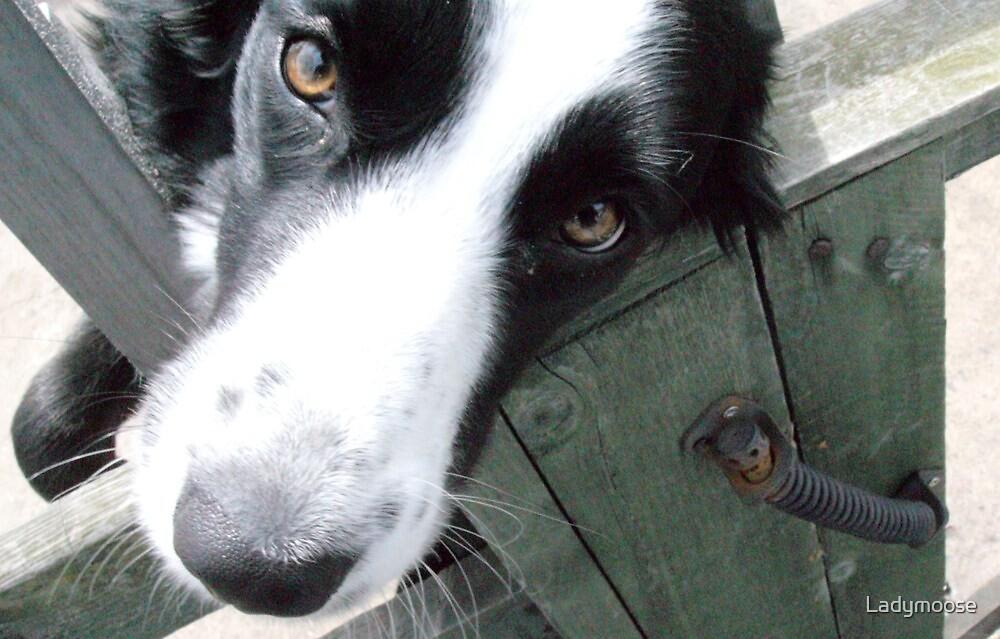 Look into my eyes by Ladymoose