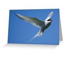 Arctic Tern (Frame 2 of 3)  Greeting Card