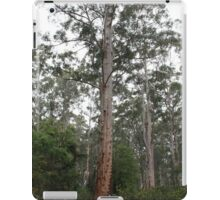 Gloucester Tree, Gloucester National Park, Pemberton, WA iPad Case/Skin