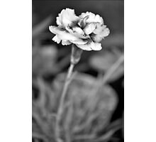 B&W Flower Photography #3 Photographic Print