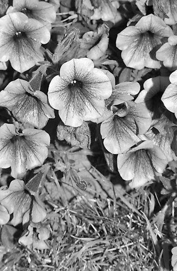 B&W Flower Photography #2 by Jessica Slater