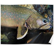 Bull Trout Poster