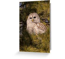 Dark Brown Eyes In The Evergreen / Barred Owl Greeting Card