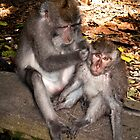 Bali Monkey Business by JohnKarmouche