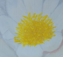 "Fine art. Water Lillie ""Tenderness""Oil painting. Nature. Flower Sticker"
