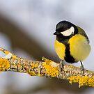 Yellow on yellow by Janika