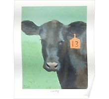 Cow number 13 Poster