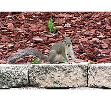Posing For Peanuts Photographic Print