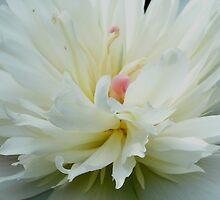 Breath of Spring by lilynoelle