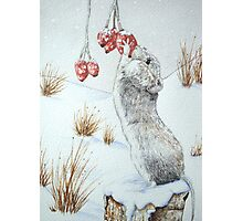 Cute mouse and red berries snow scene wildlife art   Photographic Print