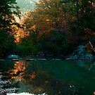 Backlit Morning Stream by Lisa G. Putman