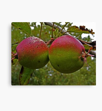 IRISH APPLES Canvas Print