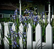 Irises by Phillip M. Burrow