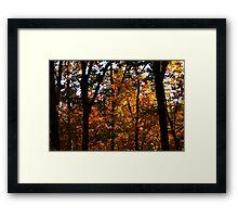 Ouachita Forest II Framed Print