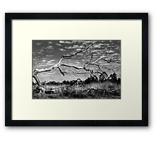 Beauty Even In Death Framed Print