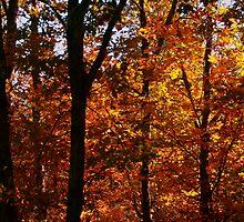 Ouachita Forest III by Lisa G. Putman