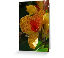 A Tiger of a Lily Greeting Card