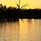 Sunsets On Wonga Wetlands. by Petehamilton