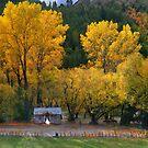 Autumn Arrowtown Wedding  by Peter Hammer