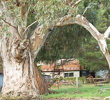 Old Gum Tree, Eden Park  by Pauline Tims