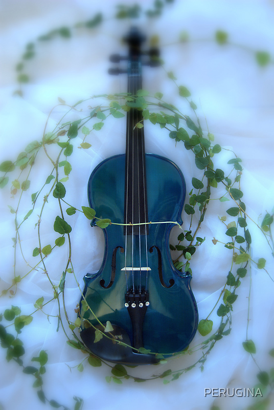 il violino blu con edera © 2010 patricia vannucci by PERUGINA