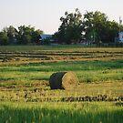 Hay There by principiante