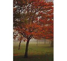 Tree in Soft Focus Photographic Print