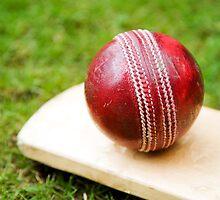 Cricket by Steve Woods