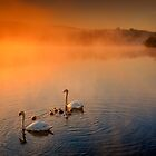 Sunny morning swim... by David Mould