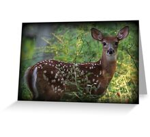 Summertime Fawn Greeting Card