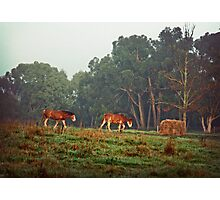 Breakfast time Photographic Print