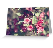 Blossoms of an azalea Greeting Card