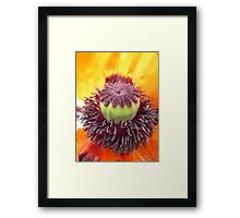 Middle of a Poppy Framed Print