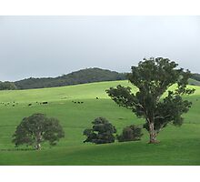 Country Landscape (6628) Photographic Print