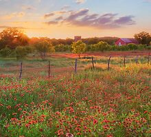 Texas HIll Country Wildflowers at Sunset 1 by RobGreebonPhoto