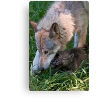 Timber Wolf And Pups Canvas Print