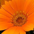 Orange Delight by SusanAdey