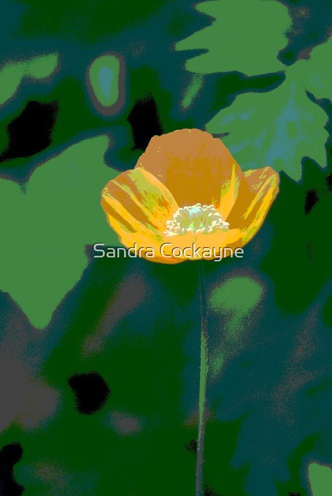Summer Poppy by Sandra Cockayne