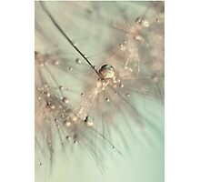 morning sparkle Photographic Print