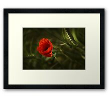 In The Shadow In The Light 2 Framed Print