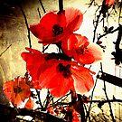Spring Red 3     by Steven  Sandner
