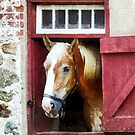 Palomino by Barn Door by Susan Savad