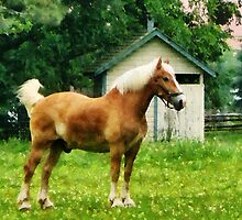 Palomino in Pasture by Susan Savad